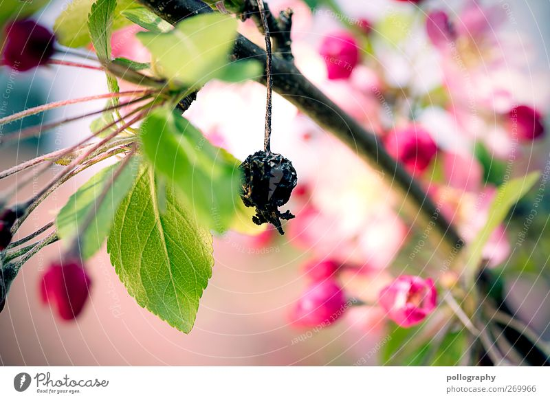 Nature Old Green Tree Red Plant Summer Leaf Loneliness Black Environment Emotions Spring Garden Blossom Fruit