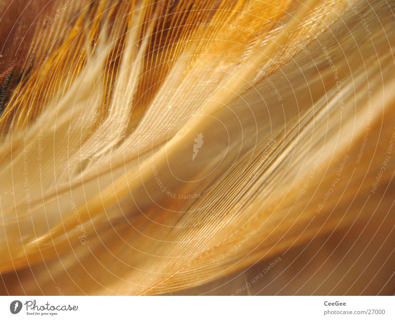 Nature Colour Warmth Line Brown Soft Feather Physics Easy Fine Cuddly Ochre Fuzz