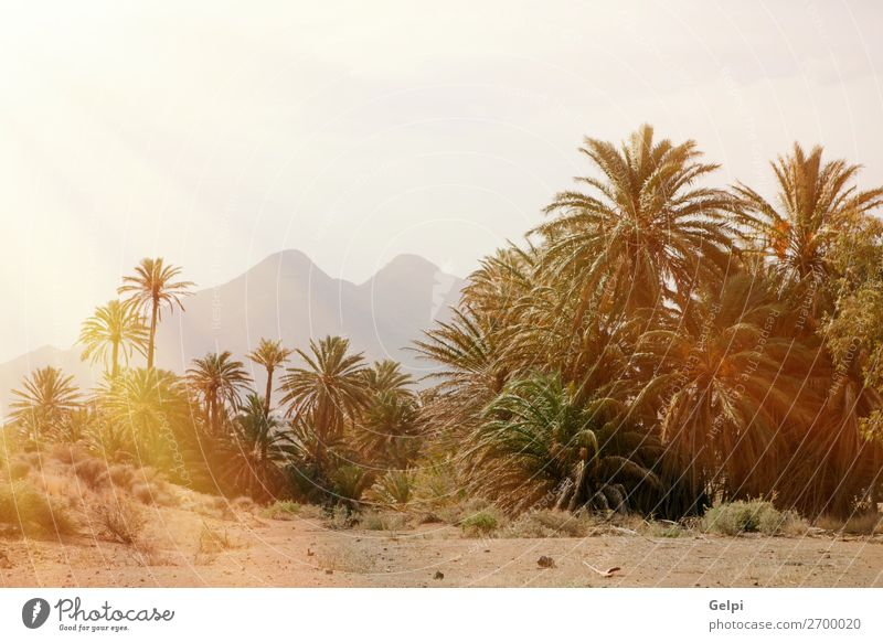 Desert place with palm trees located in southeast Spain Exotic Beautiful Vacation & Travel Summer Sun Island Mountain House (Residential Structure) Garden