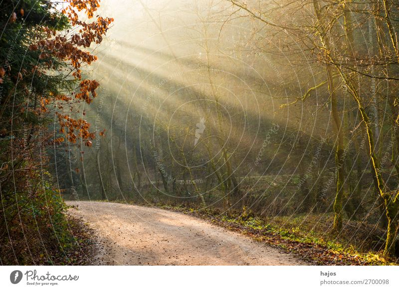 Light appearance in the forest Relaxation Winter Nature Beautiful weather Warmth Forest Soft Idyll Light (Natural Phenomenon) Sunbeam Sunlight rays off