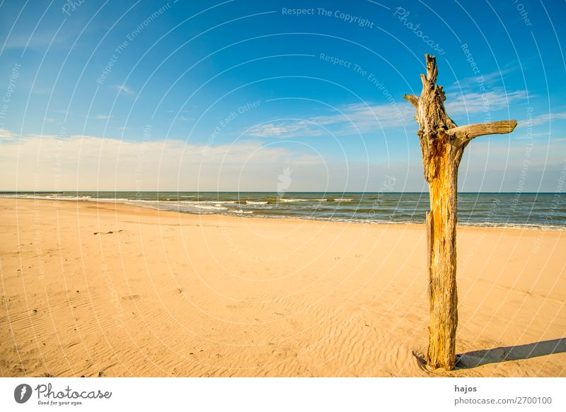 lonely beach of the Baltic Sea Vacation & Travel Summer Beach Nature Sand Sky Clouds Blue Brown Multicoloured Idyll Ocean Baltic beach Lonely Empty paradise