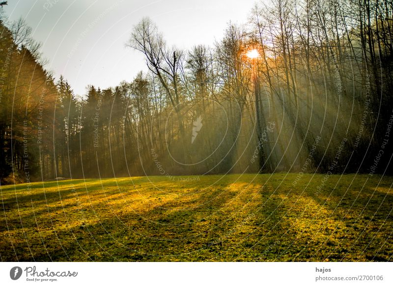 Sunbeams in the forest Relaxation Winter Nature Warmth Forest Bright Soft Idyll rays Light (Natural Phenomenon) reflections trees Meadow Green Autumn