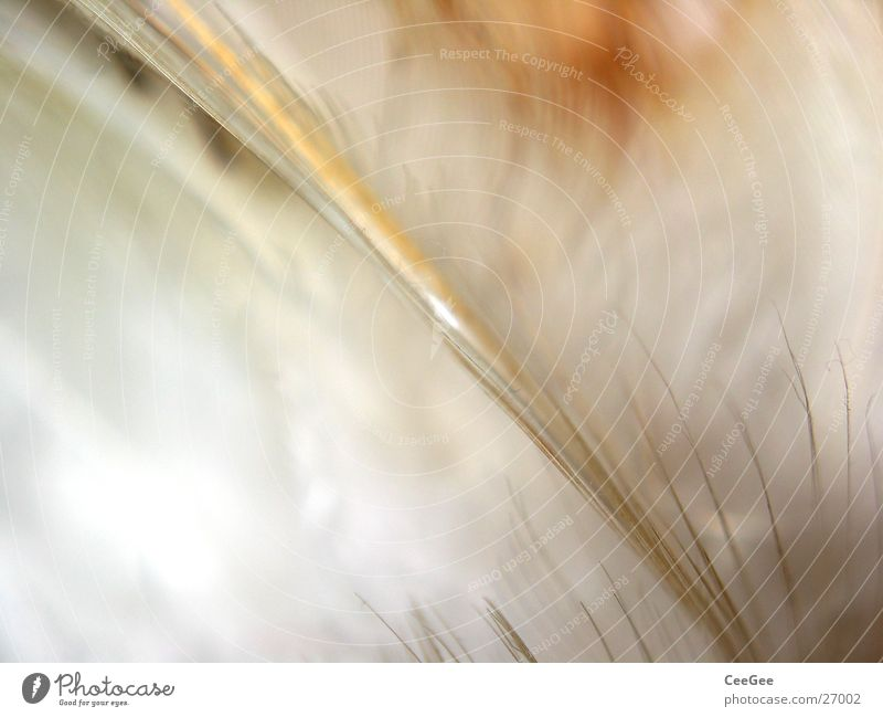 Nature White Colour Line Bright Brown Soft Feather Easy Fine Cuddly Ochre