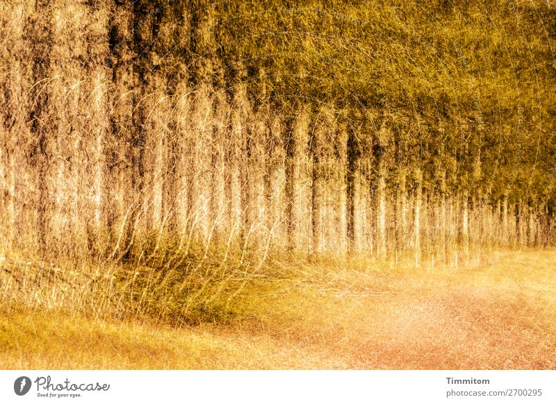 Black Forest Environment Nature Plant Tree Bushes Field Tree trunk Spruce Double exposure Colour photo Exterior shot Deserted Evening