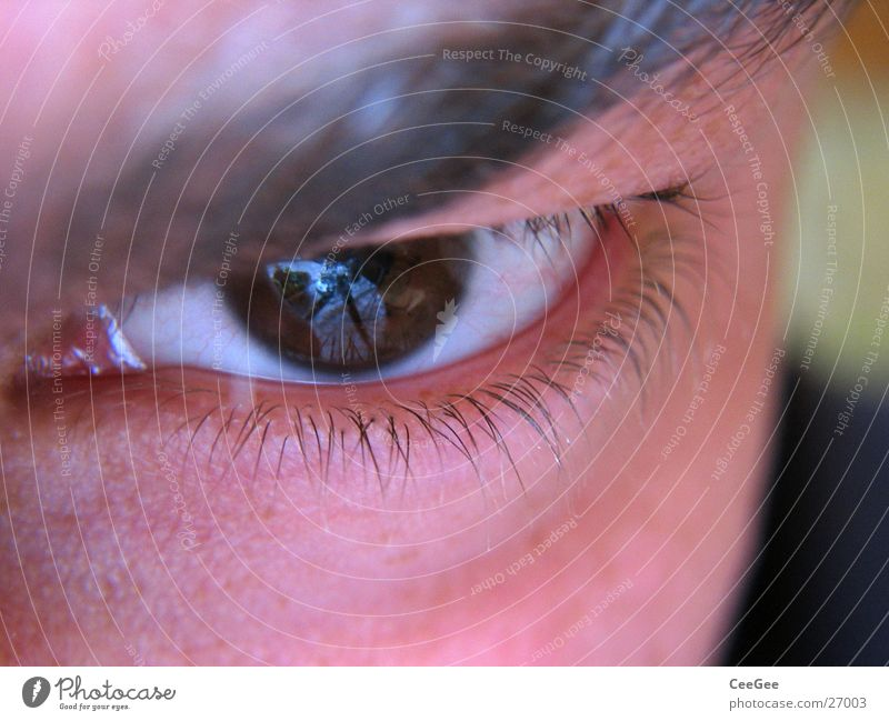 transparency Pupil White Brown Earnest Vessel Eyelash Fine Man Eyes Iris Human being Skin Close-up Macro (Extreme close-up) Face Looking eyebrown look at
