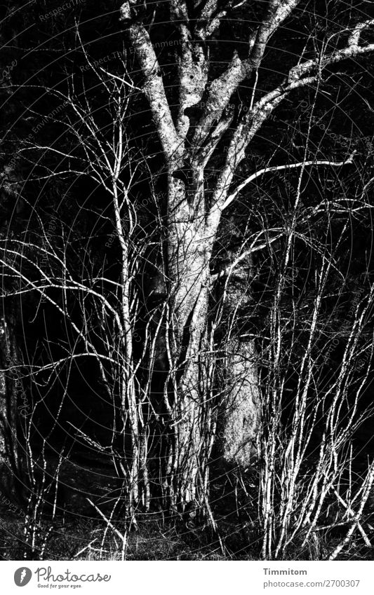 Black Forest, partial view Environment Nature Plant Winter Tree Bushes Simple Natural Gray White Emotions Black & white photo Exterior shot Deserted Day Light