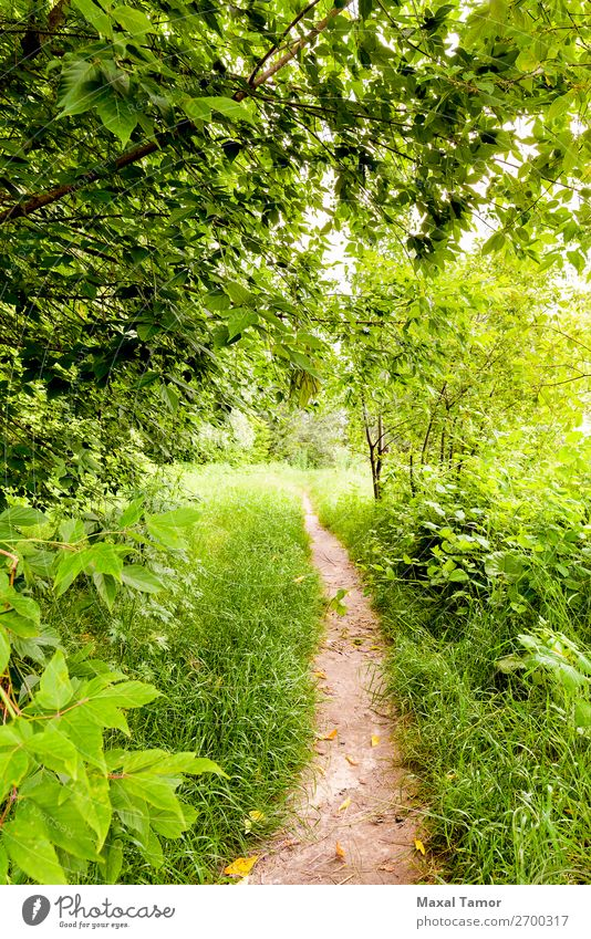 A walk in the Woods Herbs and spices Summer Sun Environment Nature Landscape Plant Clouds Tree Leaf Park Forest Lake Lanes & trails Natural Green background