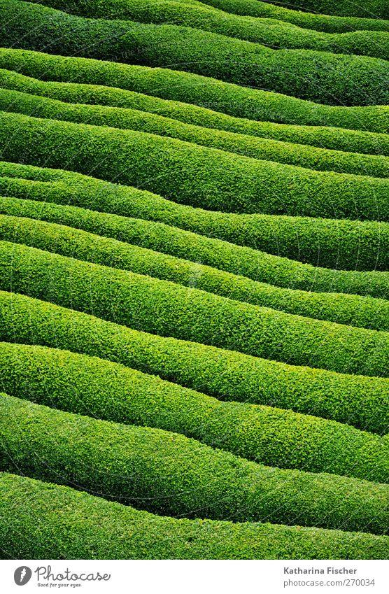 Nature Green Plant Environment Landscape Grass Dye Garden Park Field Bushes Foliage plant Land Feature Bright green
