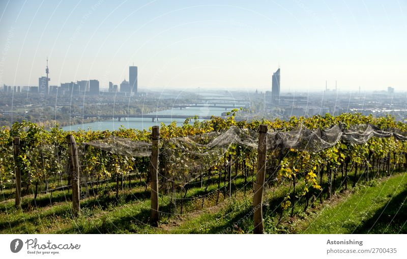 Vienna & Wine Environment Nature Landscape Plant Sky Cloudless sky Horizon Summer Weather Beautiful weather Bushes Agricultural crop Vine Field Hill River