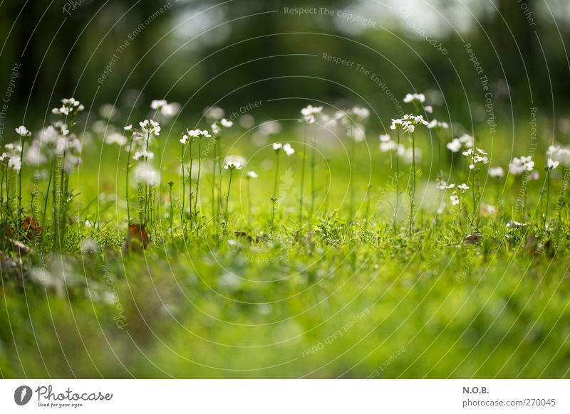 Nature Plant Green White Flower Joy Environment Blossom Spring Meadow Happy Garden Park Growth Esthetic Happiness
