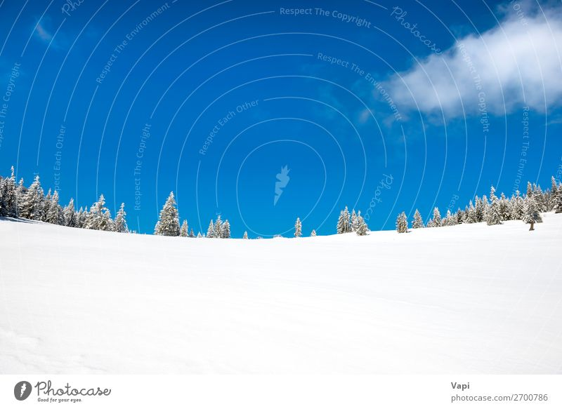 Winter pine trees in snow Beautiful Vacation & Travel Adventure Far-off places Freedom Sun Snow Winter vacation Mountain Christmas & Advent Environment Nature