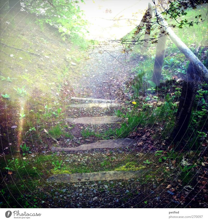 fairytale forest Sun Hiking Earth Summer Bushes Moss Forest Wood Loneliness Relaxation Nature Stairs Lanes & trails Double exposure Footpath Colour photo