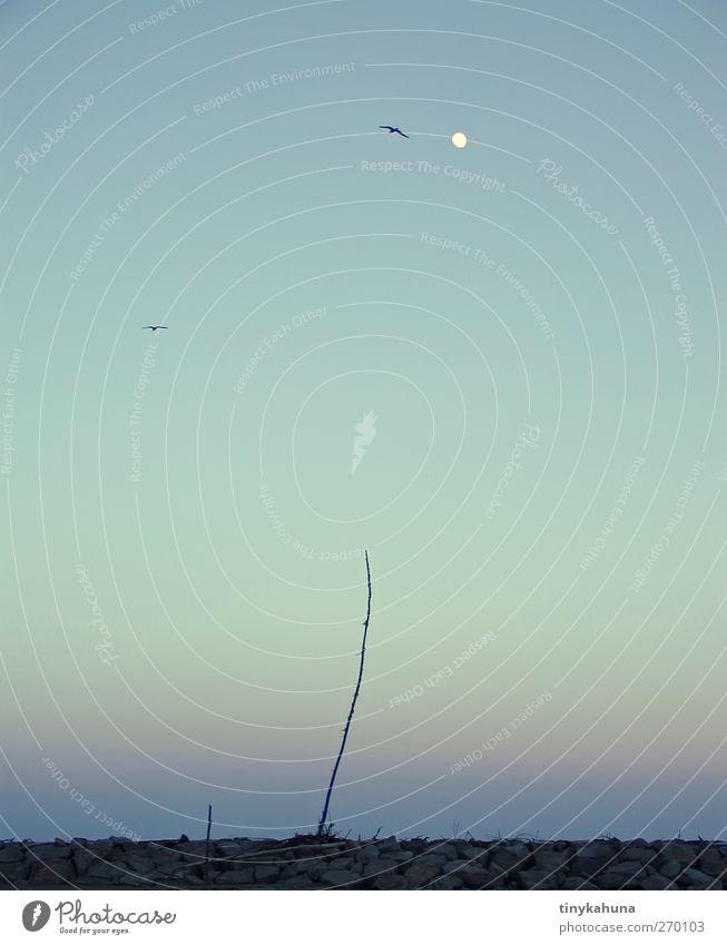 mallard duck Calm Meditation Ocean Cloudless sky Night sky Moon Beautiful weather Bushes Coast Wild animal Bird 2 Animal Stick Stone Wood Observe Flying Stand
