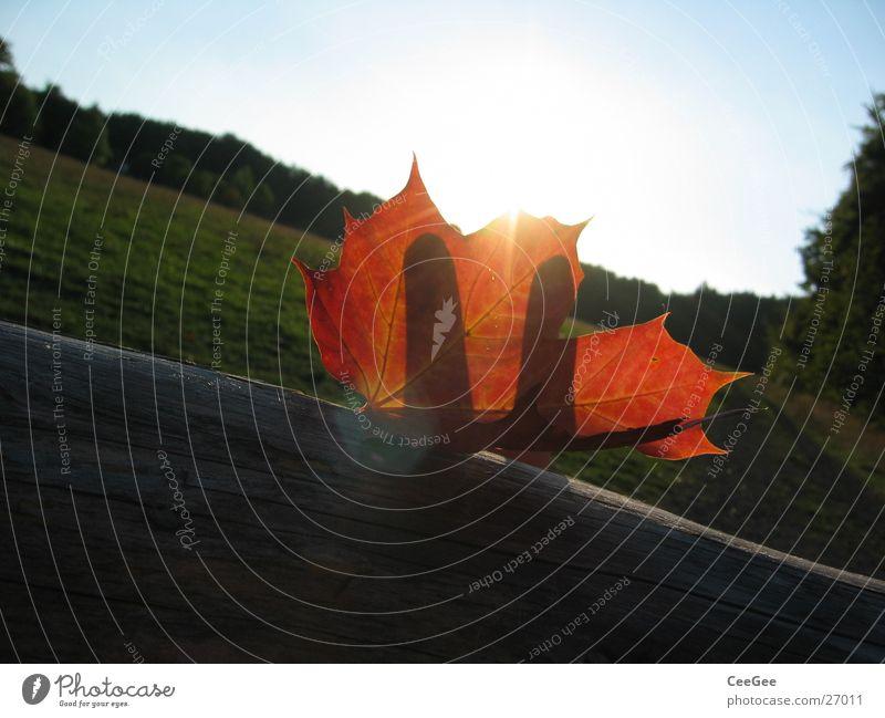 Hand Sky Sun Blue Red Leaf Colour Forest Autumn Meadow Wood Landscape Fingers Crazy Lie Concealed