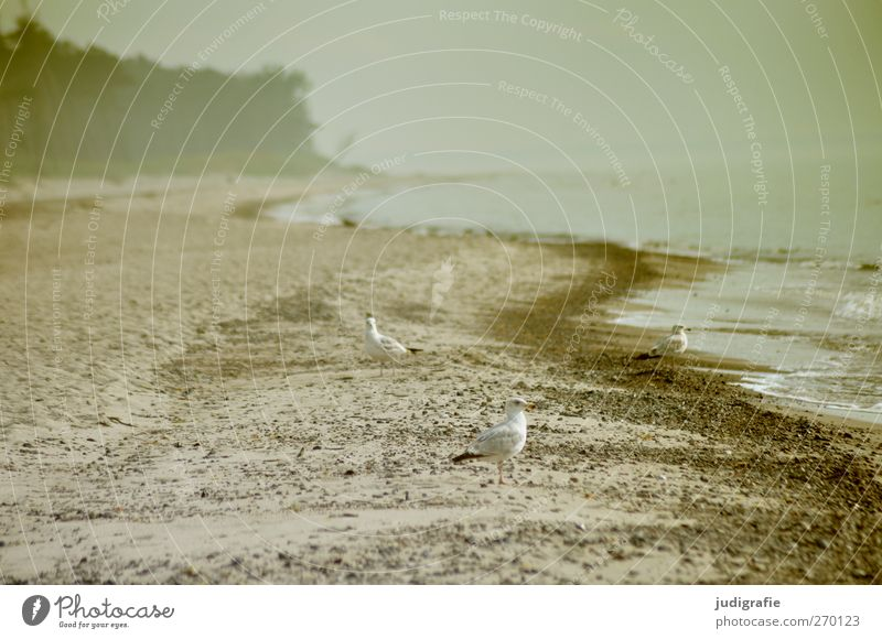 Nature Water Plant Beach Animal Environment Landscape Coast Bird Moody Climate Wild animal Natural Baltic Sea Seagull