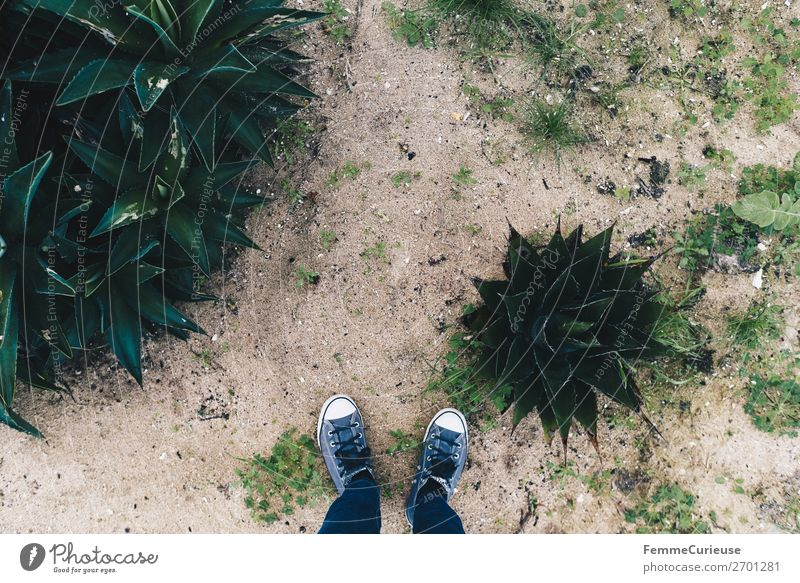 Feet of a person on sand with plants Leisure and hobbies 1 Human being Vacation & Travel Portugal Coast Sand Sandy beach Plant Sneakers Jeans To go for a walk