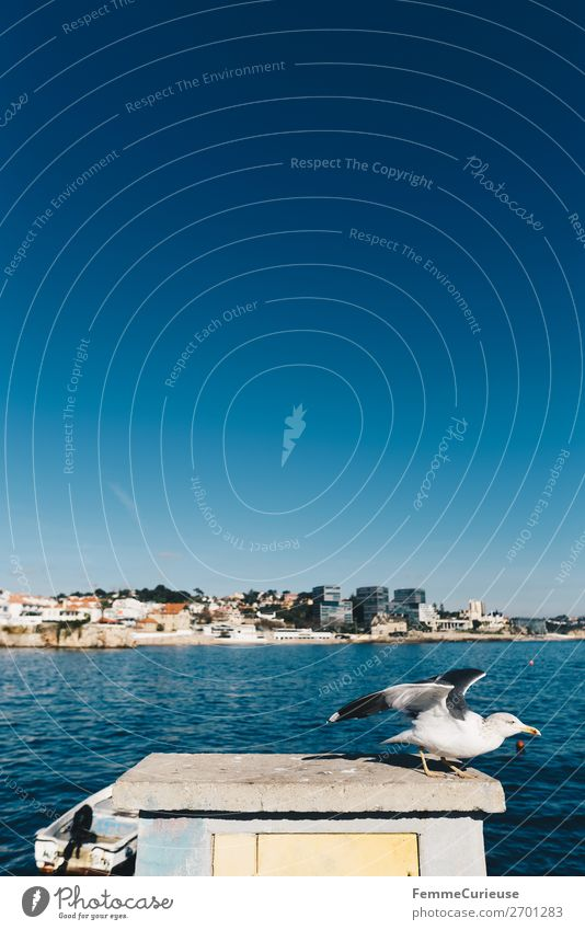 Seagull setting out to fly away Animal Vacation & Travel Freedom Blue sky Beautiful weather Sunbeam Flying Atlantic Ocean Port City Portugal Colour photo