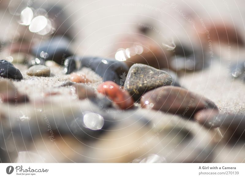 Hiddensee l pebbles Environment Nature Elements Sand Water Beautiful weather Coast Baltic Sea Ocean Island Glittering Lie Smoothness Multicoloured Colour photo