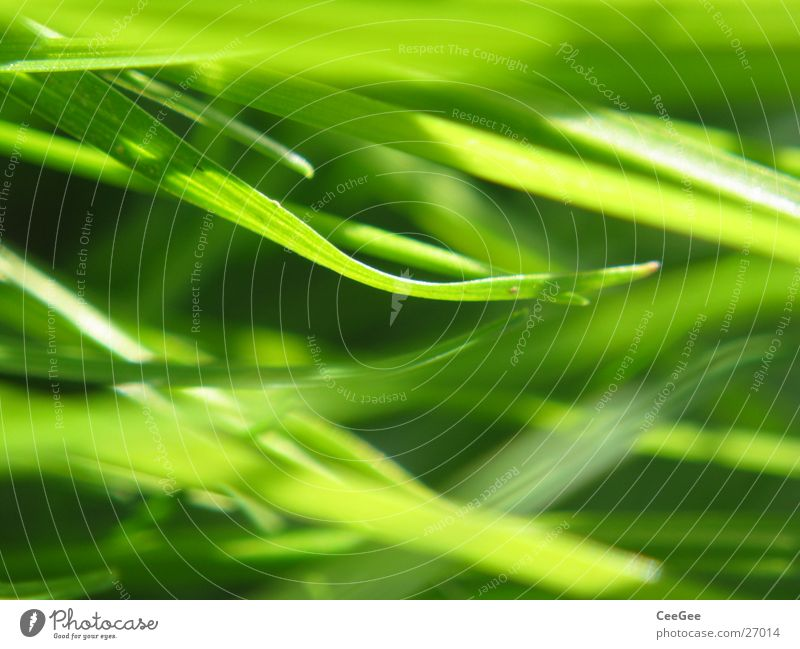 Nature Green Meadow Grass Lawn Blade of grass Muddled