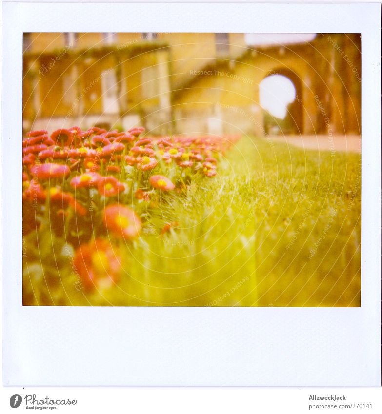 daisies Grass Blossom Green Red Spring fever Daisy Garden Bed (Horticulture) Lawn Colour photo Exterior shot Polaroid Deserted Day Shallow depth of field