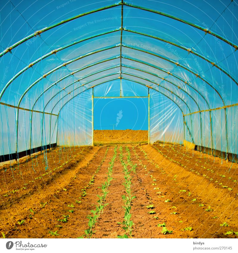 greenhouse atmosphere Agriculture Forestry Cloudless sky Spring Summer Beautiful weather Agricultural crop Field Greenhouse Growth Exceptional Hot Long Warmth