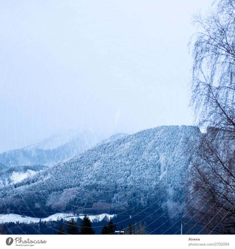 snow at higher altitudes Landscape Sky Winter Snow Tree Forest Hill Alps Mountain Pre-alpes Mountain forest Bright Blue White Calm Ease Nature Country life