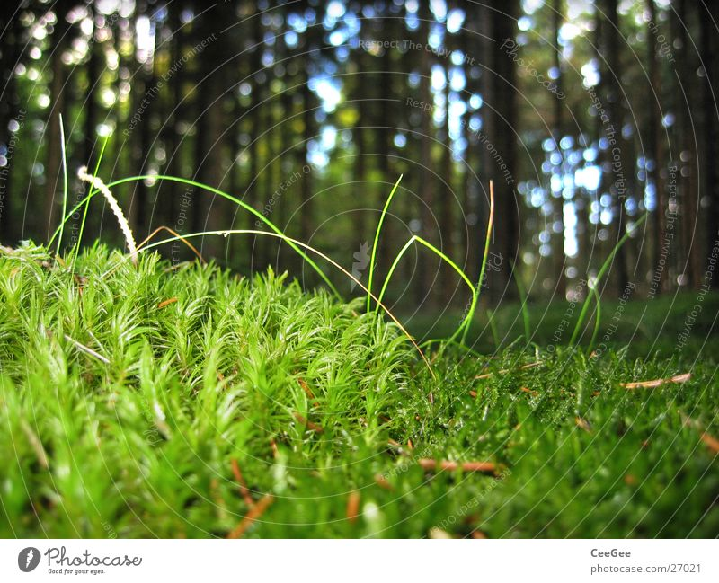 Tree Green Plant Forest Grass Floor covering Treetop Woodground