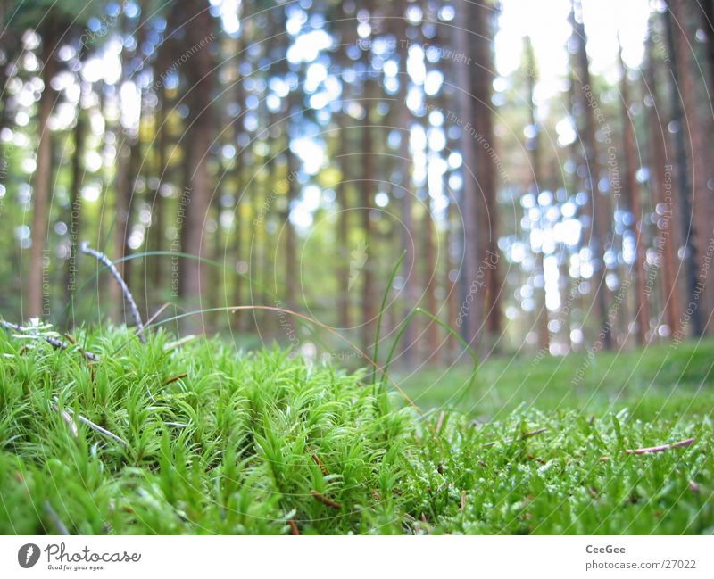 forest ground Woodground Forest Tree Green Treetop Plant Grass Floor covering Macro (Extreme close-up) Close-up