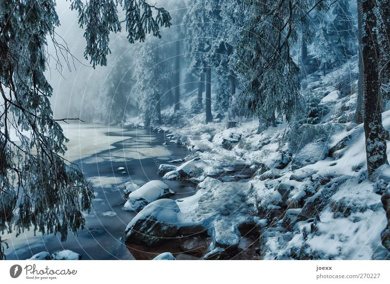 fairy tales Nature Winter Bad weather Fog Ice Frost Snow Forest Lakeside Cold Blue Black White Idyll Climate Mummelsee Lake Gorgeous Fantastic Enchanted forest