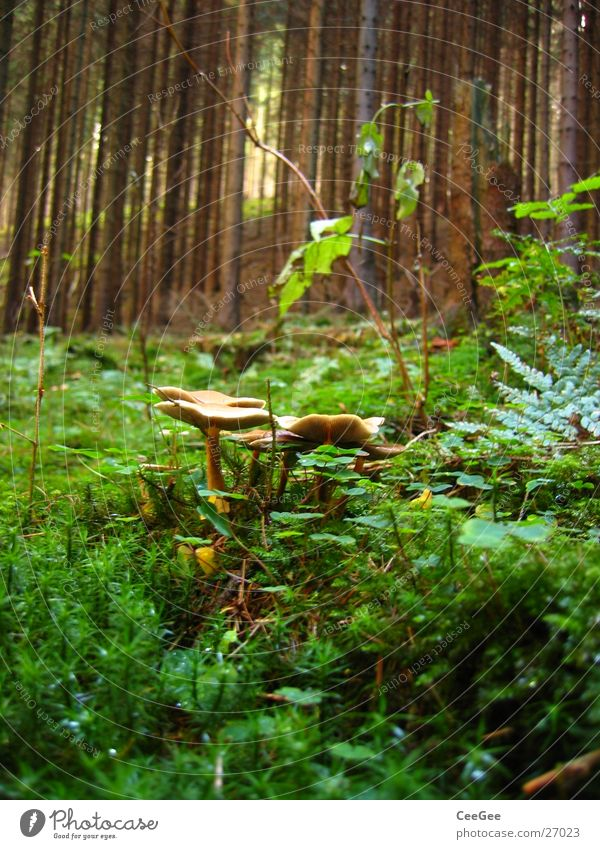 in the wood Forest Woodground Stick Autumn Tree Green Plant Mushroom weaving Tree trunk Nature Moss