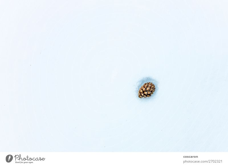 Pinecone buried in the snow. Winter image Snow Mountain Decoration Feasts & Celebrations Christmas & Advent Nature Plant Field Forest Ornament Bright Cold Above
