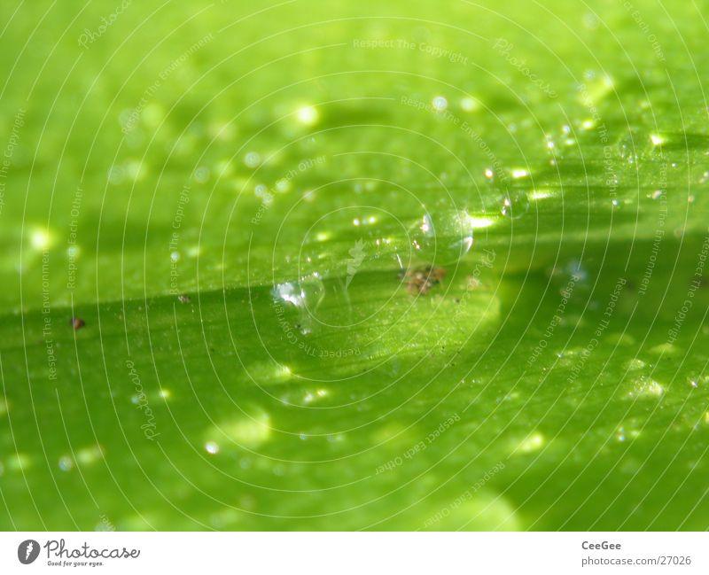 Water Green Plant Leaf Rain Drops of water Wet Damp