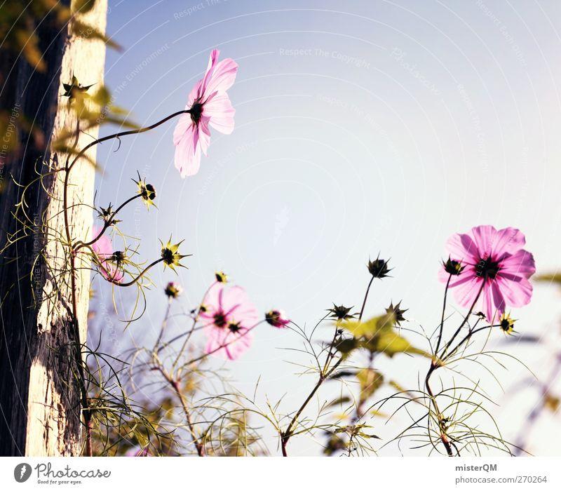 Good heavens. Environment Nature Landscape Plant Esthetic Contentment Flower Flower meadow Flower stalk Flowerbed Window box Idyll Peaceful Beautiful weather