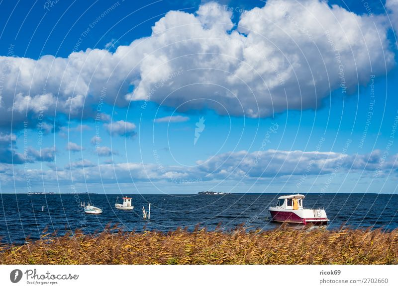 Boats on the Baltic Sea in Denmark Relaxation Vacation & Travel Tourism Nature Landscape Water Clouds Coast Harbour Tourist Attraction Watercraft Maritime Blue