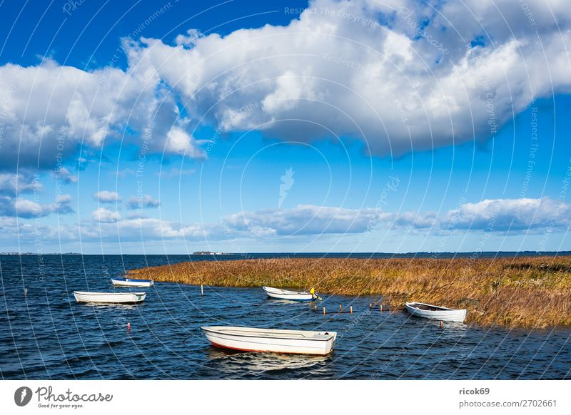 Boats on the Baltic Sea in Denmark Relaxation Vacation & Travel Tourism Nature Landscape Water Clouds Coast Harbour Watercraft Maritime Blue Yellow Idyll