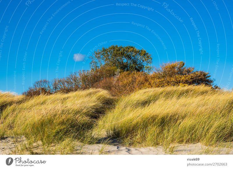 Baltic Sea coast near Klintholm Havn in Denmark Vacation & Travel Tourism Beach Ocean Nature Landscape Clouds Autumn Grass Coast Blue Green Idyll Environment