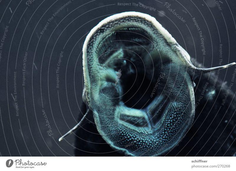O sole mio! Animal Fish Aquarium 1 Dark Wels Muzzle To gripe Sing Wild animal Loudmouth Interior shot Deserted