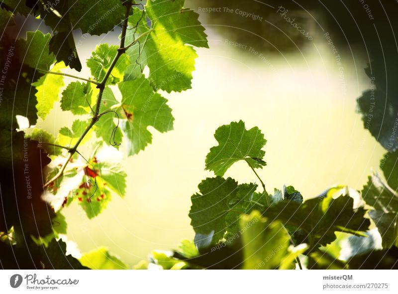 Rebblick. Environment Nature Landscape Plant Esthetic Wine Vine Vineyard Bunch of grapes Grape harvest Wine growing Italy Grape variety Green Mature