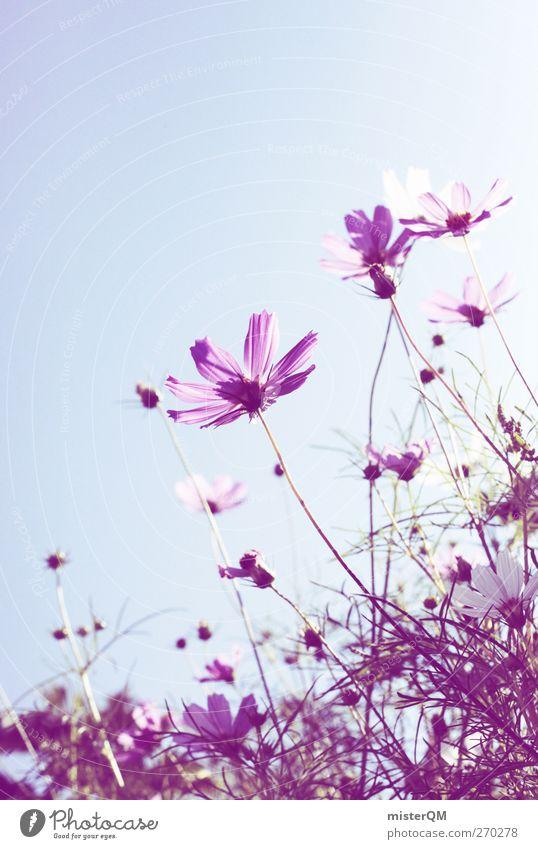 the purple ones. Environment Nature Esthetic Flower Flower meadow Flower stalk Flower shop Violet Idyll Meadow flower Colour photo Subdued colour Exterior shot
