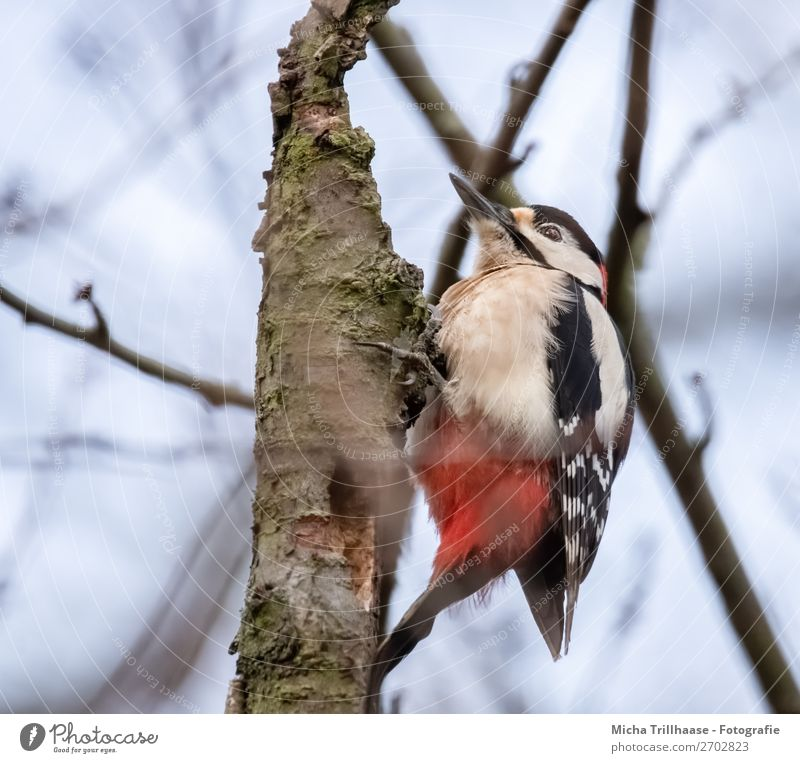 Sky Nature Blue Colour White Red Tree Animal Forest Black Bird Illuminate Wild animal Feather Beautiful weather Wing