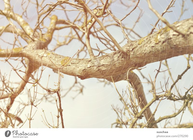 branches Environment Nature Air Sky Sunlight Spring Winter Climate Beautiful weather Drought Tree Wood Hope Environmental protection Bleak Branch