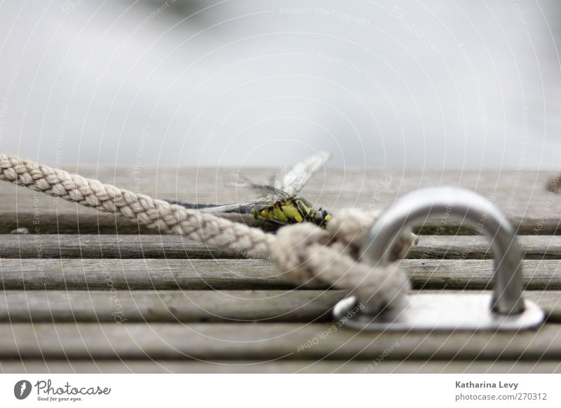 Nature Water Animal Loneliness Yellow Wood Gray Small Lake Flying Wild animal Elegant Authentic Rope Gloomy Wing
