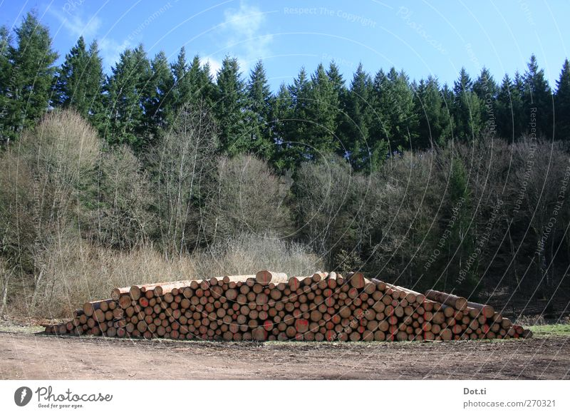 Sky Nature Tree Forest Wood Lanes & trails Arrangement Signs and labeling Tree trunk Forestry Heap Clearing Stack of wood