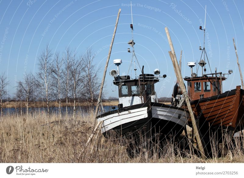 two old wooden fishing boats standing in the grass next to a body of water Environment Nature Landscape Plant Water Cloudless sky Winter Beautiful weather tree