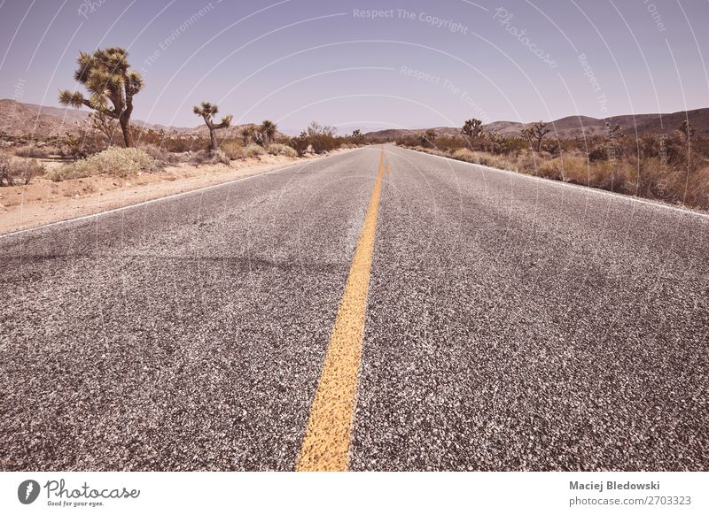 Empty road in the Joshua Tree National Park, USA. Lifestyle Vacation & Travel Trip Adventure Far-off places Freedom Expedition Summer Summer vacation Nature
