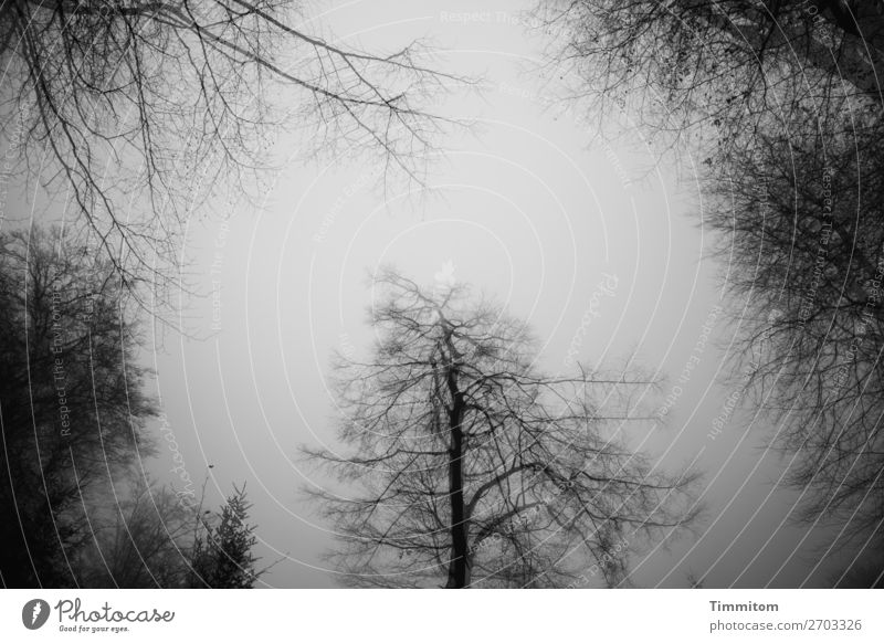 Fog in the forest Environment Nature Plant Sky Winter Tree Forest Dark Natural Gray Black White Emotions Double exposure Black & white photo Exterior shot