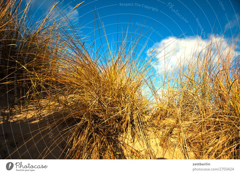 Sky Vacation & Travel Nature Heaven Landscape Ocean Winter Travel photography Beach Autumn Coast Grass Germany Tourism Copy Space Baltic Sea