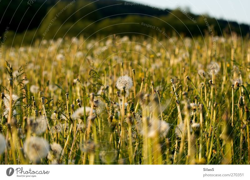 spring meadow Nature Plant Flower Grass Bushes Dandelion Meadow Hill Blue Yellow Green White Spring Colour photo Exterior shot Deserted Day Light Sunlight