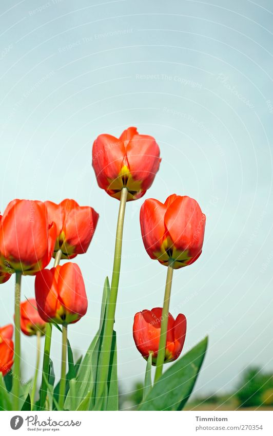 Sky Nature Blue Green Red Plant Flower Environment Yellow Life Emotions Spring Contentment Beginning Growth Tulip