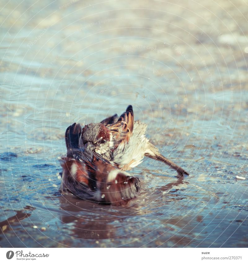 Wild Guys Environment Nature Animal Wild animal Bird 2 Pair of animals Swimming & Bathing Fight Playing Authentic Dirty Brash Small Natural Cute Brown Power